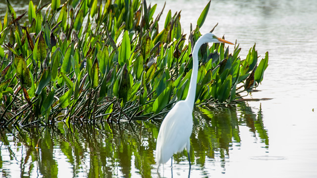 cypress-lake-golf-wildlife2